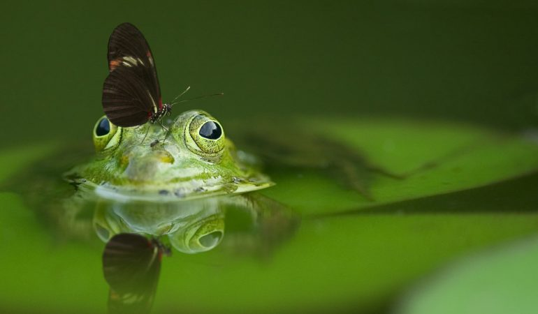 Bevezetés az ökológiai közgazdaságtanba – Mennyit ér egy pillangó?
