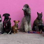 Fenntartható-e hosszú távon a kutyatartás?